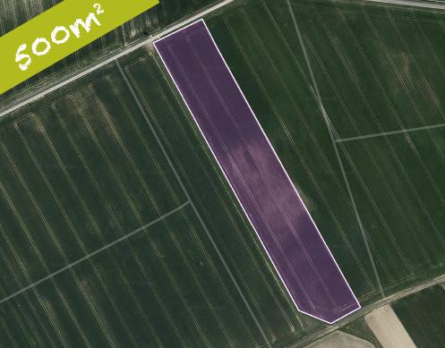 Blühwiesenpatenschaft Für 500 M² Wiesenfelder Modell